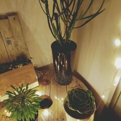 小屋/ライトアップ/LEDライト/DIY/暮らし こんばんは😃 夜の小屋の中はライトアップ…