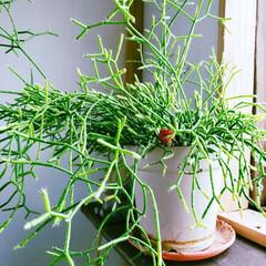 お正月/窓際インテリア/植物のある暮らし/小屋/DIY/暮らし こんにちは👋 今年もあと少しですね~✴️…