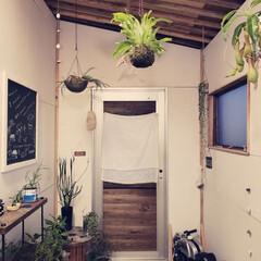 植物のある暮らし/田舎暮らし/小屋/DIY/暮らし おはようございます☺️ 今朝は天気がよく…