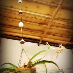 植物のある暮らし/小屋/キャンドゥ/暮らし おはようございます! 息子がキャンドゥで…