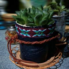 多肉ちゃんの植木鉢に/多肉植物/ダイソー/はじめてフォト投稿 ダイソーで購入した紙コップスリーブと布、…(1枚目)
