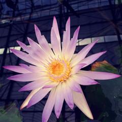暮らし 魔法の花🔯🏵️