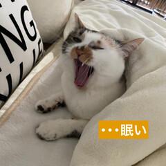 保護猫/しあわせ/ねこ/猫大好き/LIMIAペット同好会/住まい/... フリーダム(笑)