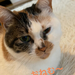 保護猫/しあわせ/ねこ/ホットカーペット/猫大好き/LIMIAペット同好会/... サツキちゃんもおねむ顔🥱😴 皆様おやすみ…