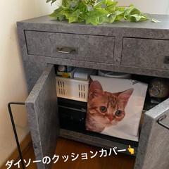 保護猫/しあわせ/ねこ/猫大好き/LIMIAペット同好会/ダイソー/... 先日リメイクした家具の戸を開けたくて開け…(2枚目)