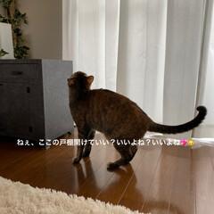 保護猫/しあわせ/ねこ/猫大好き/LIMIAペット同好会/ダイソー/... 先日リメイクした家具の戸を開けたくて開け…