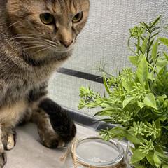 保護猫/しあわせ/ねこ/猫大好き/LIMIAペット同好会/住まい/... お小さい頃はこんなに寝相が悪かったアヤメ…(2枚目)