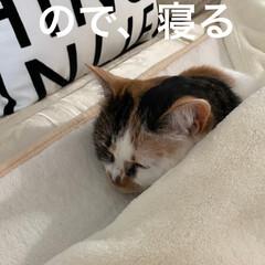 保護猫/しあわせ/ねこ/猫大好き/LIMIAペット同好会/住まい/... フリーダム(笑) (2枚目)