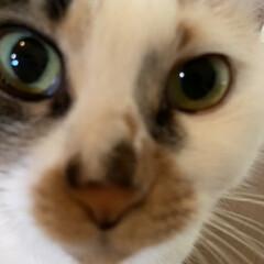 保護猫/しあわせ/ねこ/猫大好き/LIMIAペット同好会/住まい/... おはようさんですにゃ!!🐱💖  本日はサ…