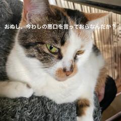 保護猫/しあわせ/ねこ/猫大好き/LIMIAペット同好会/住まい/... 眠い猫は目付きが悪くておもしろいですにゃ…