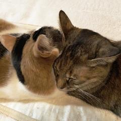 保護猫/しあわせ/ねこ/猫大好き/LIMIAペット同好会/住まい/... おはようございます😃 今朝はちょっと寒か…