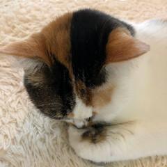 保護猫/ねこ/しあわせ/住まい/暮らし 皆様おやすみなさい😘
