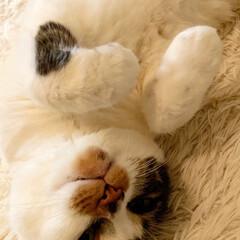 しあわせ/ねこ/保護猫/住まい/暮らし 今朝も暖かいですね💕