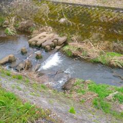 自然 小さな川