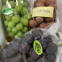 三種の葡萄🍇/秋の味覚  旦那が何かのお礼とかで葡萄の詰め合わせ…
