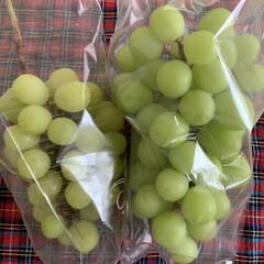 最安値/畑から/季節の果物 果樹園からシャインマスカットを 買ってき…