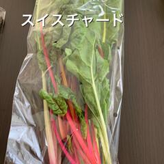 旬物/道の駅 今日のお買い物‼︎  細竹、アスパラ、ス…(3枚目)