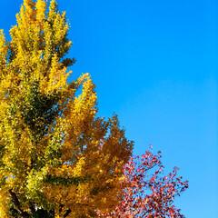 晴天/青空/風景/景色/空/フォロー大歓迎 雲ひとつない、見事な青空🤩✨✨✨✨ そし…
