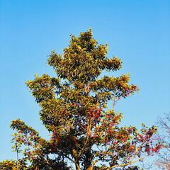 風景/景色/空/青空/暮らし/フォロー大歓迎 今日も見事に清々しい青空🤩✨✨ 実はあた…