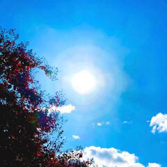 公園/風景/景色/太陽/青空/空/... 今日も風が強くて冷たいけど、とっても爽や…