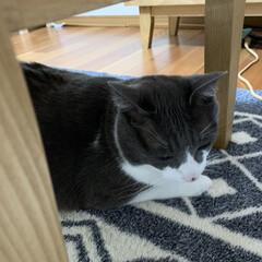 愛おしい/ビビリ/保護猫 我が家に来て3年未だに大きな音や声にビッ…