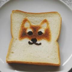 ワンコがモデル/柴犬大好き/柴犬トースト/トーストアート/食パンアレンジ/あさごぱん/... 食パンでトーストアートしてみました。 旦…