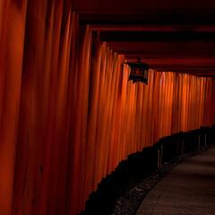 千本鳥居/伏見稲荷/朱色 京都の伏見稲荷の千本鳥居です。 観光地と…