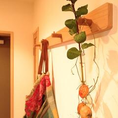 コート掛け/タモ材/杉材 タモ材と杉材で作ったコート掛け。