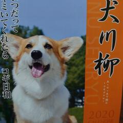 カレンダー2020 毎年同じ犬種のカレンダー!今年は娘が買っ…