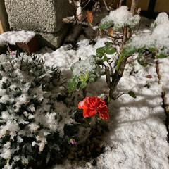 初雪/雪/冬 タイヤ交換しなきゃ😩