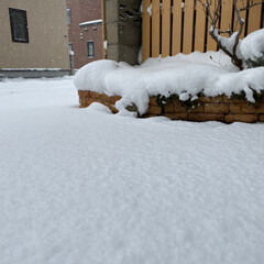 銀白/真っ白/雪 今日と昨日はずっと雪だよ…😩