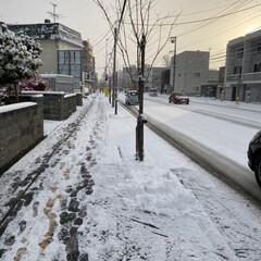 積雪/冬/雪/初雪 今から春が待ち遠しいです😭