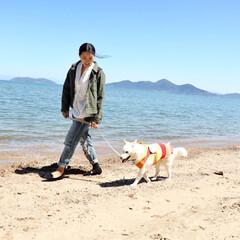 愛犬/保護犬/家族/かわいい/初めて/お散歩/... 保護犬として家族に迎えたソフィア、初めて…