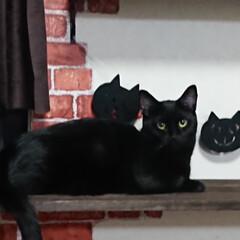 黒猫/ハロウィ―ン/リアル/ハロウィン2019 ハッピーハロウィーン🎃  ハロウィーン飾…