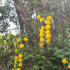 花/野生の花/綺麗な花 綺麗な花が庭土手に咲いていました🍀 この…(1枚目)