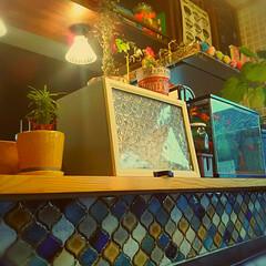 吊り棚/ペンダントライト/植木鉢/ソテツキリン/カフェケース/黒板/... 始めてタイル貼りをしました。 憧れのコラ…