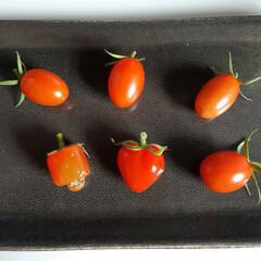 ハートのトマト/種から育てる/家庭菜園/トマト/はらぺこグルメ ハート❤️のトマト🍅できました☆ 横のは…