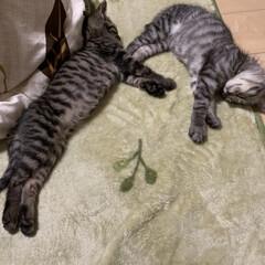 子猫/暮らし
