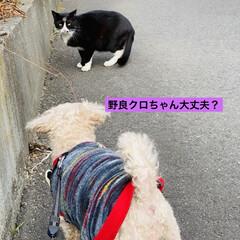 キズ/階段/野良猫/野良クロちゃん/猫/犬/... こんにちはヽ(^0^)ノ  華音散歩🐾 …(4枚目)