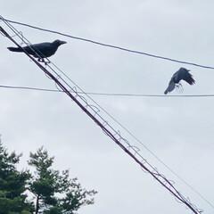 飛行/子育て/鳥/カラス こんにちは🎶 朝方までの雨もあがり、ムシ…(5枚目)