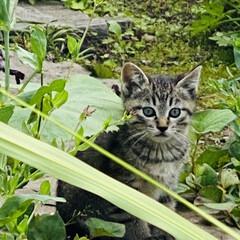 キジトラ/赤ちゃん/野良猫 こんばんわ🌙*.。  野良クロちゃんの赤…(8枚目)