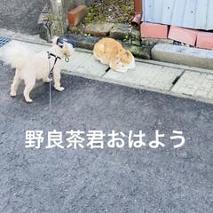 野良茶君/野良猫/散歩/華音/トイプー/トイプードル/... こんにちは🎶 今日は、湿度が63%気温2…(2枚目)