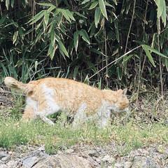 野良チャ/野良猫/ねこ 🐩の散歩中視線を感じて振り向くと、野良チ…(3枚目)