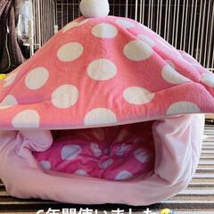 ベッド/熊さん/お家/冬用/トイプー/トイプードル/... おはようございます٩(*´꒳`*)۶ 華…(1枚目)