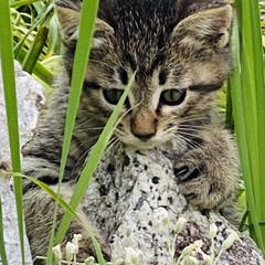 キジトラ/赤ちゃん/野良猫 こんばんわ🌙*.。  野良クロちゃんの赤…(2枚目)