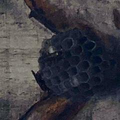 優良物件/タマゴ/アシナガバチ/蜂の巣/蜂 こんにちは🎶 雨、小雨気温20℃。ちょっ…