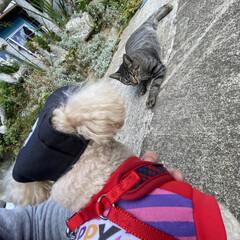 野良クロちゃん子供/野良猫/猫/トイプードル/トイプー/散歩/... こんにちは🌞 晴れてますが、風が冷たいで…