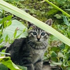 キジトラ/赤ちゃん/野良猫 こんばんわ🌙*.。  野良クロちゃんの赤…(7枚目)