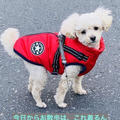 赤/中綿コート/華音/散歩/犬 こんにちはヽ(^0^)ノ 今朝は1番の冷…