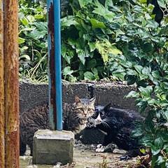 キズ/ケンカ/トラちゃん/野良クロちゃん/野良猫/ねこ こんにちは🎶 今日も☔最高気温18℃さっ…